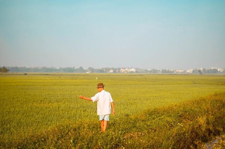 Hoi An rice fields at sunrise