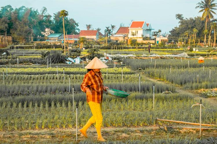 Hoi An day trip to Tra Que vegetable village
