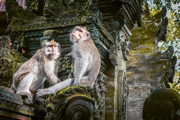 Monkeys sitting on a temple at Sacred Monkey Forest Sanctuary Ubud, Bali