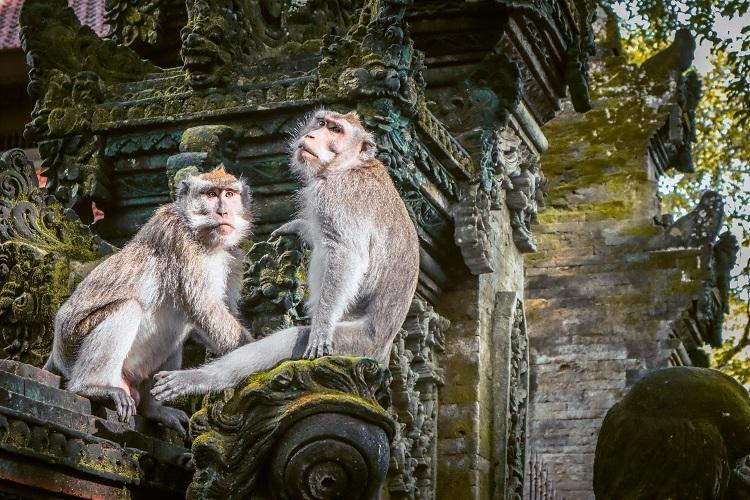 Monkeys sitting on a temple at Sacred Monkey Forest Sanctuary Ubud, Bali