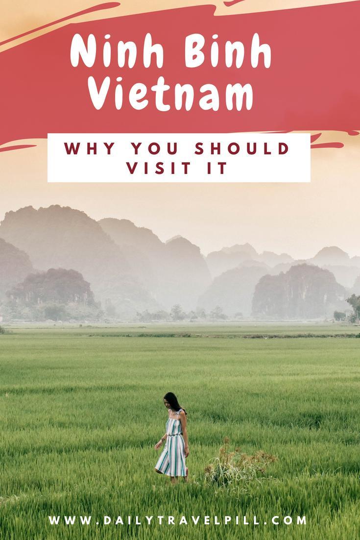 see rice fields in Ninh Binh Vietnam