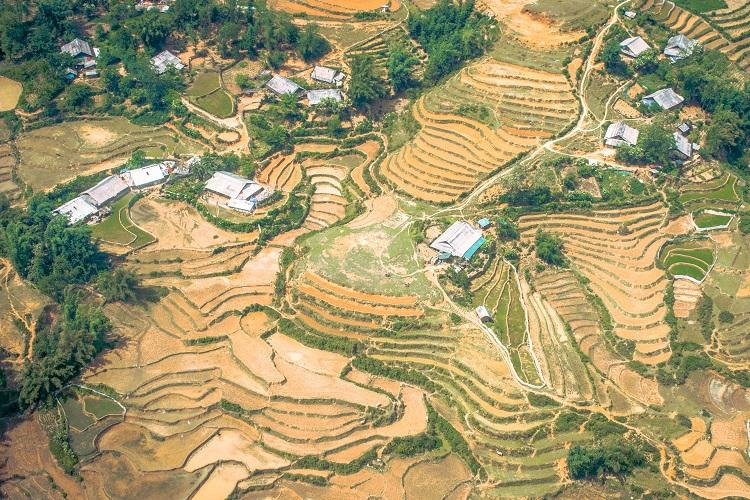 Harvested rice fields in Sapa from above