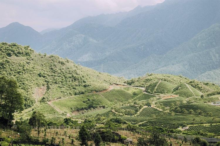 Sapa tea and rice plantations