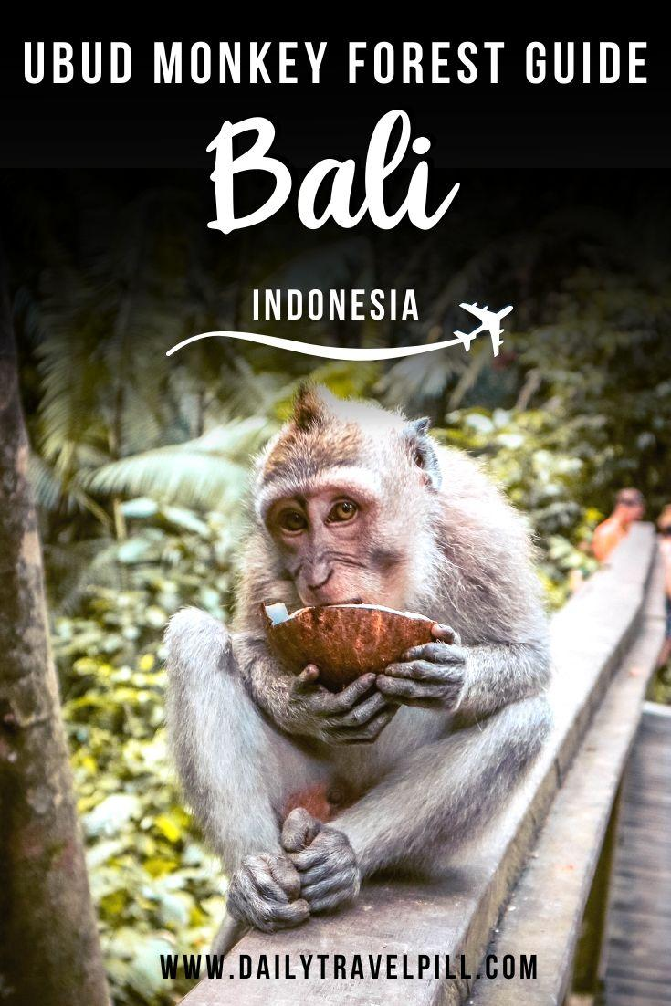 Visiting the Ubud Monkey Forest in Bali