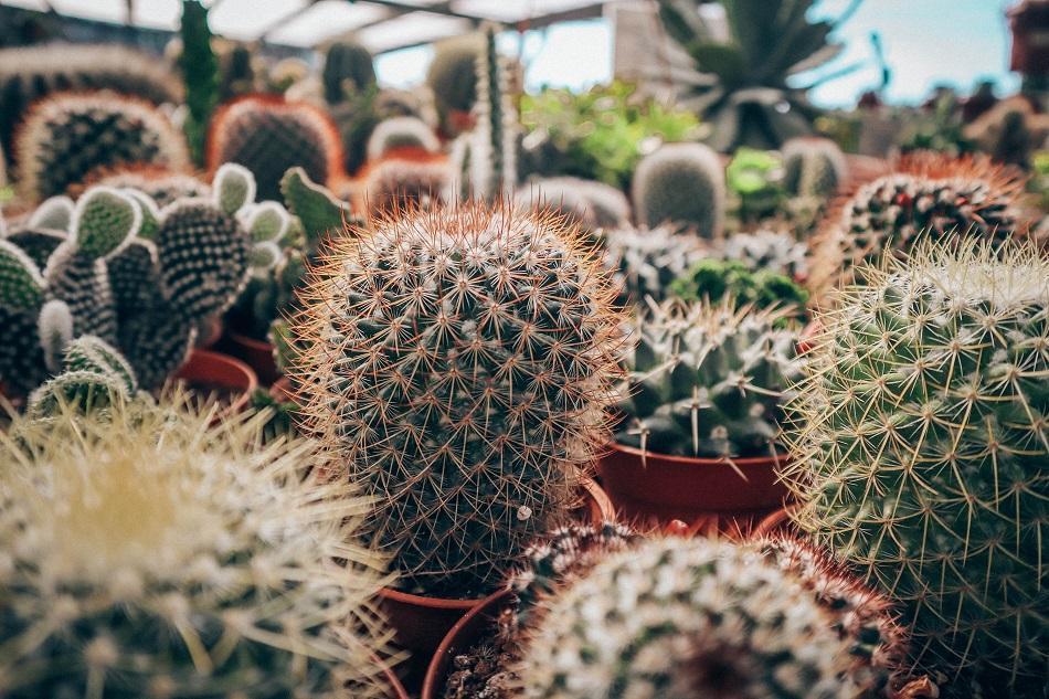 Cameron Highlands Cactus point