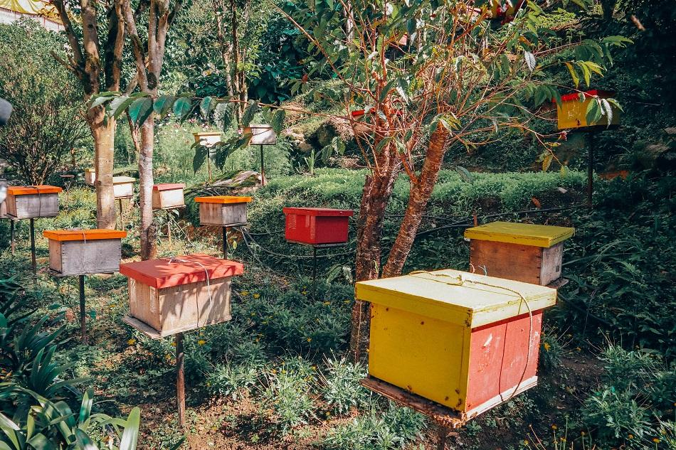 Honey bee farm in Cameron Highlands