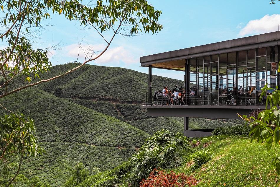 Cameron Highlands tea plantation - BOH