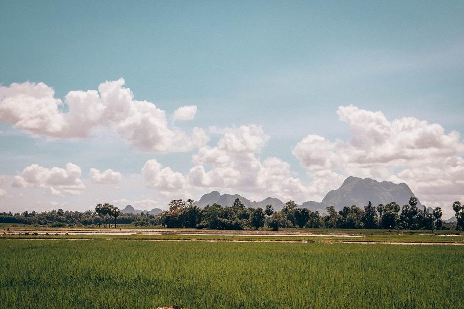 Hpa An rice fields