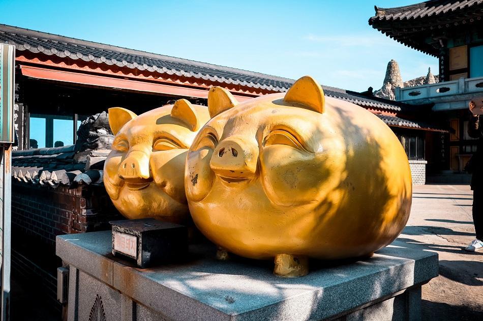 Golden piigs at Haedong Yonggungsa Temple