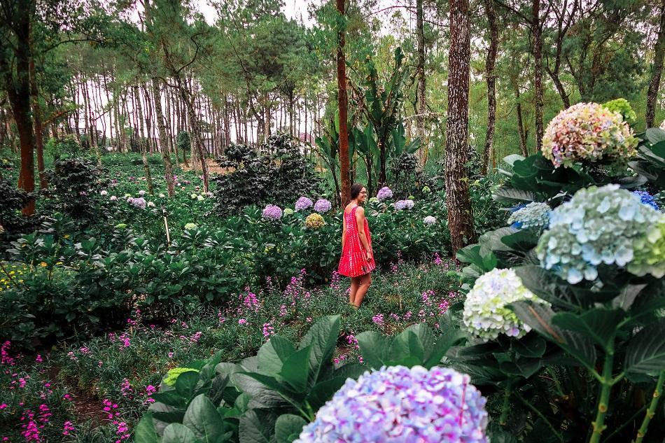 Girl in hortenesia fields