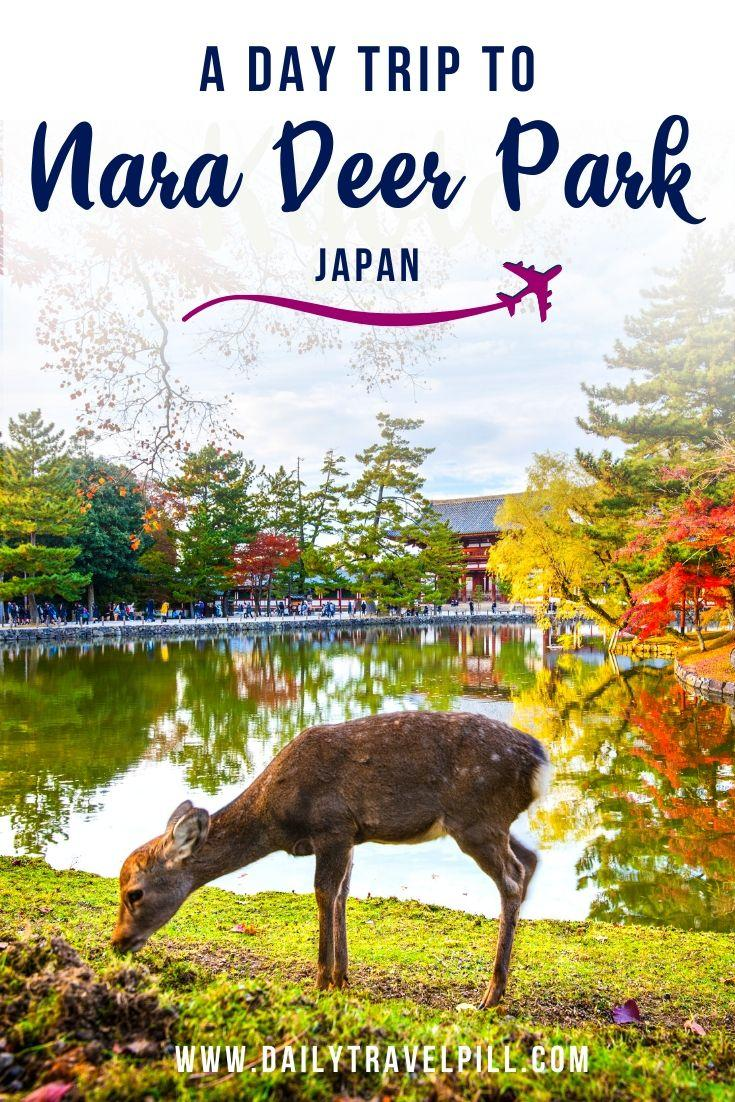 A day trip to Nara Deer Park, Japan