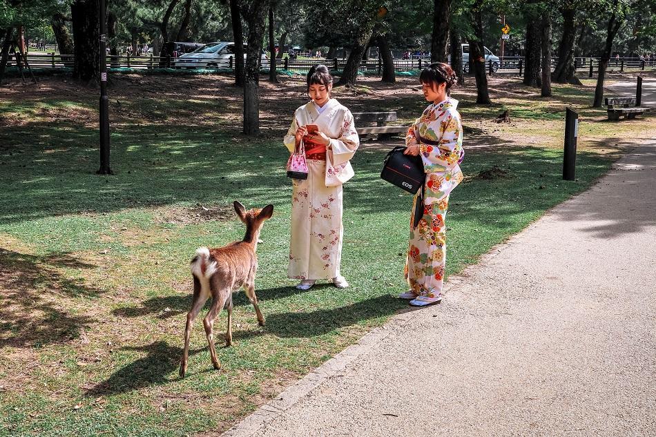 Kimono girls at Nara Park, Japan