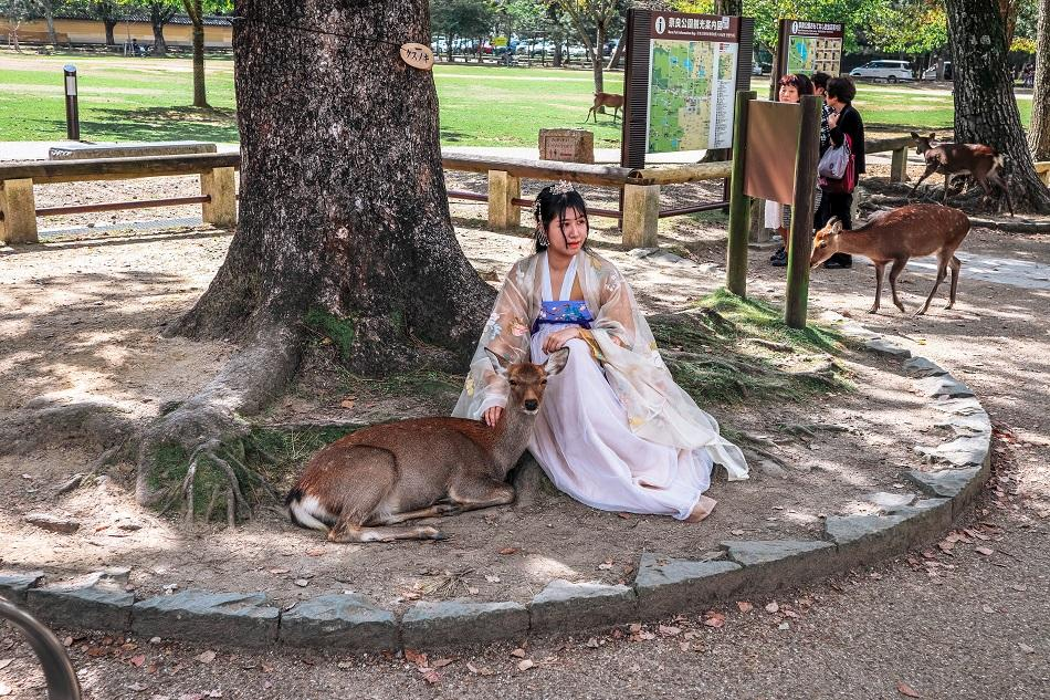 Japanese girl dressed in kimono near a deer at Nara Park, Japan