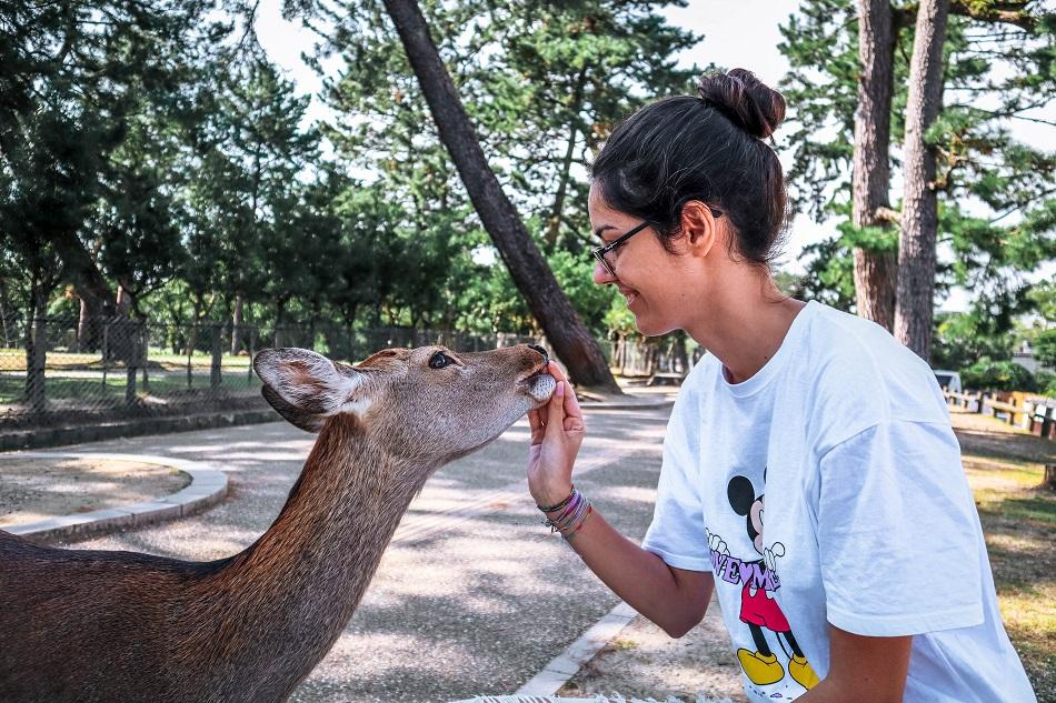 Girl feeding a deer at Nara Park, Japan