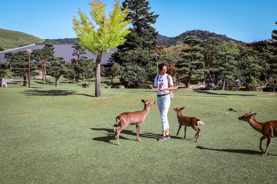 Girl feeding the deer at Nara Park, Japan