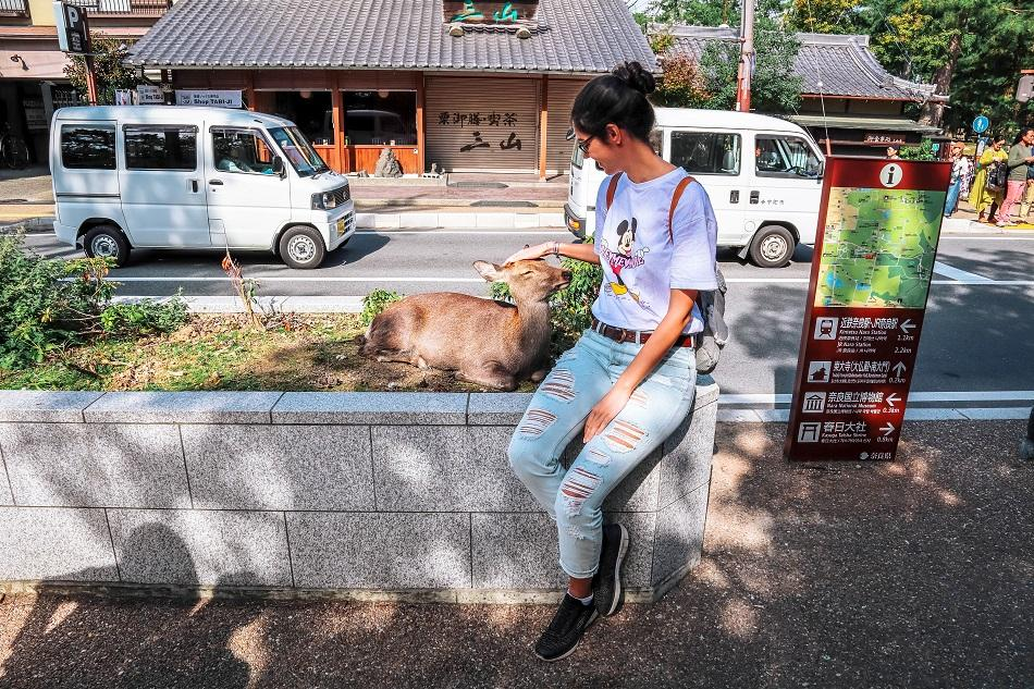 Tourist feeding the deer at Nara Park, Japan