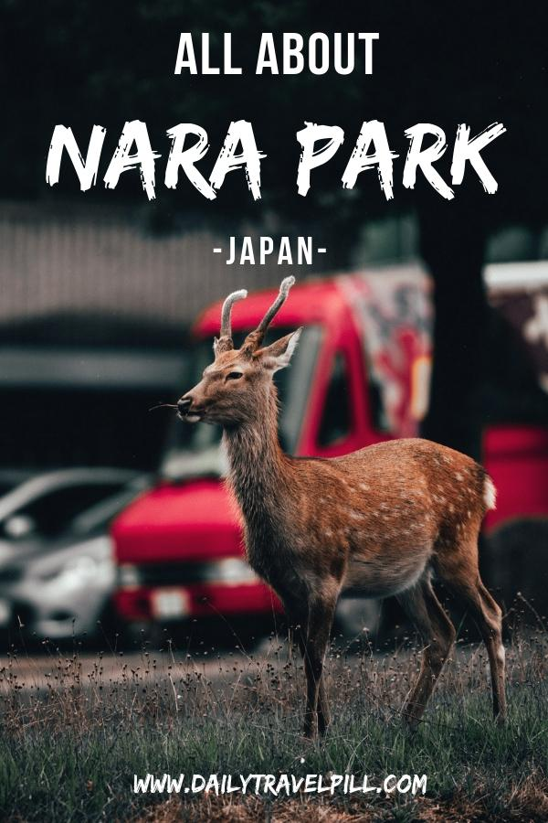 Nara deer park day trip in Japan