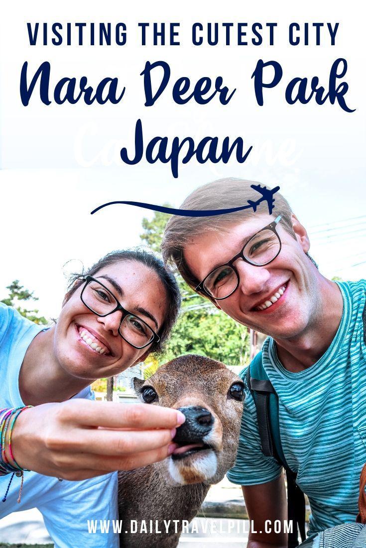 A day trip to Nara Deer Park, Japan
