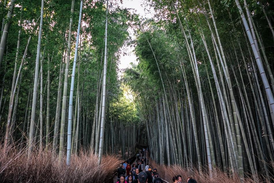 Crowds of tourists at Kyoto Arashiyama Bamboo Forest
