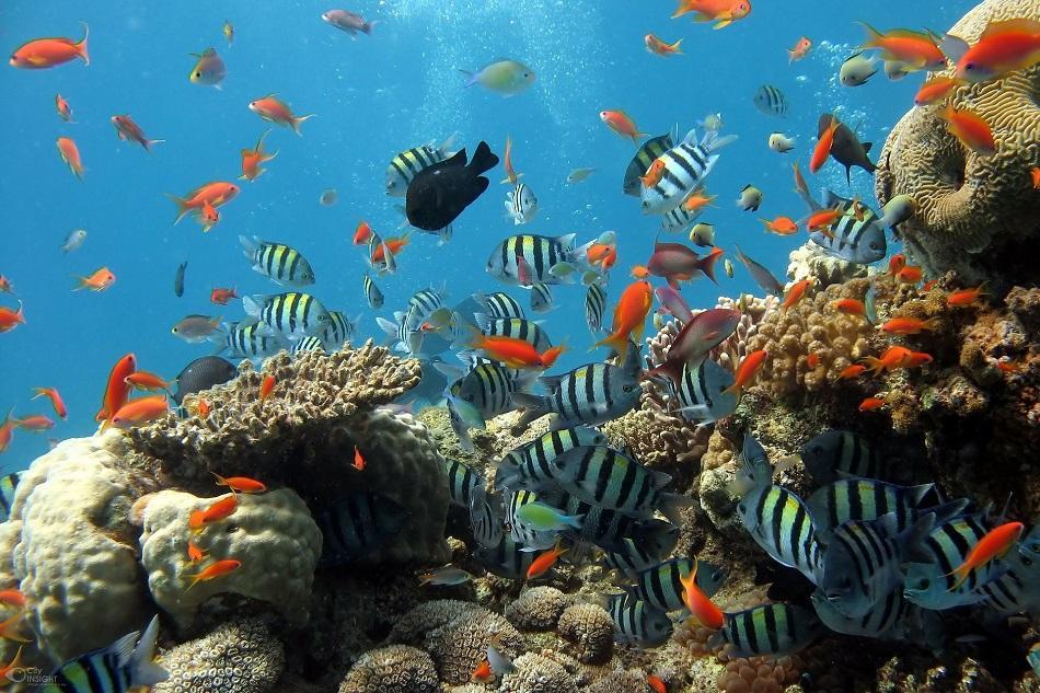 Busan Aquarium tourist attraction