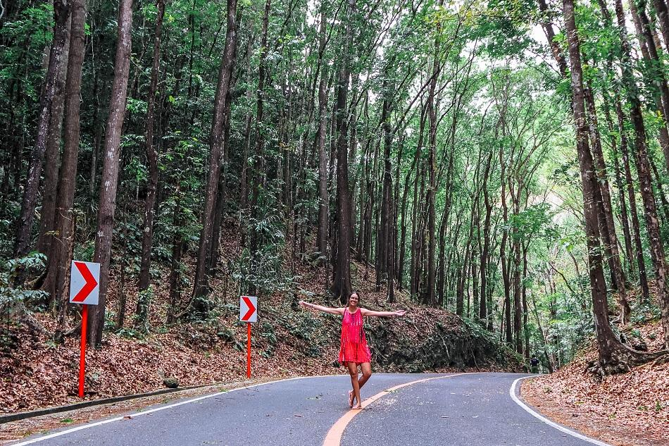 Bilar Loboc mahogany man-made forest in Bohol