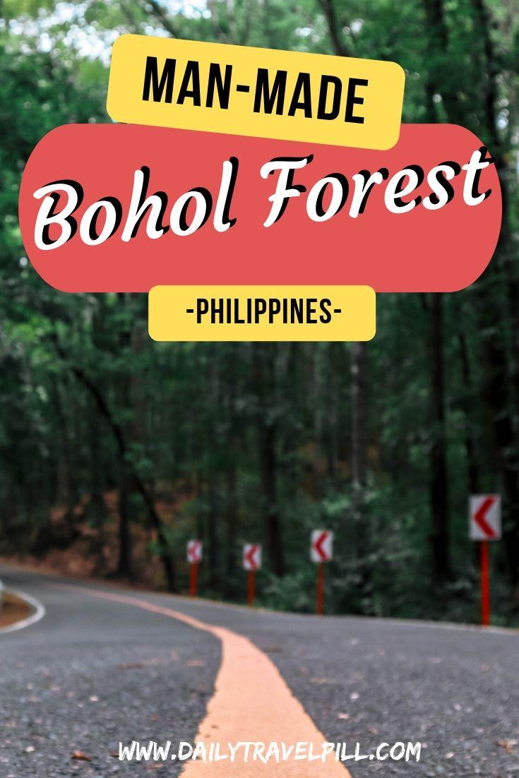 Bilar Loboc mahogany man-made forest in Bohol