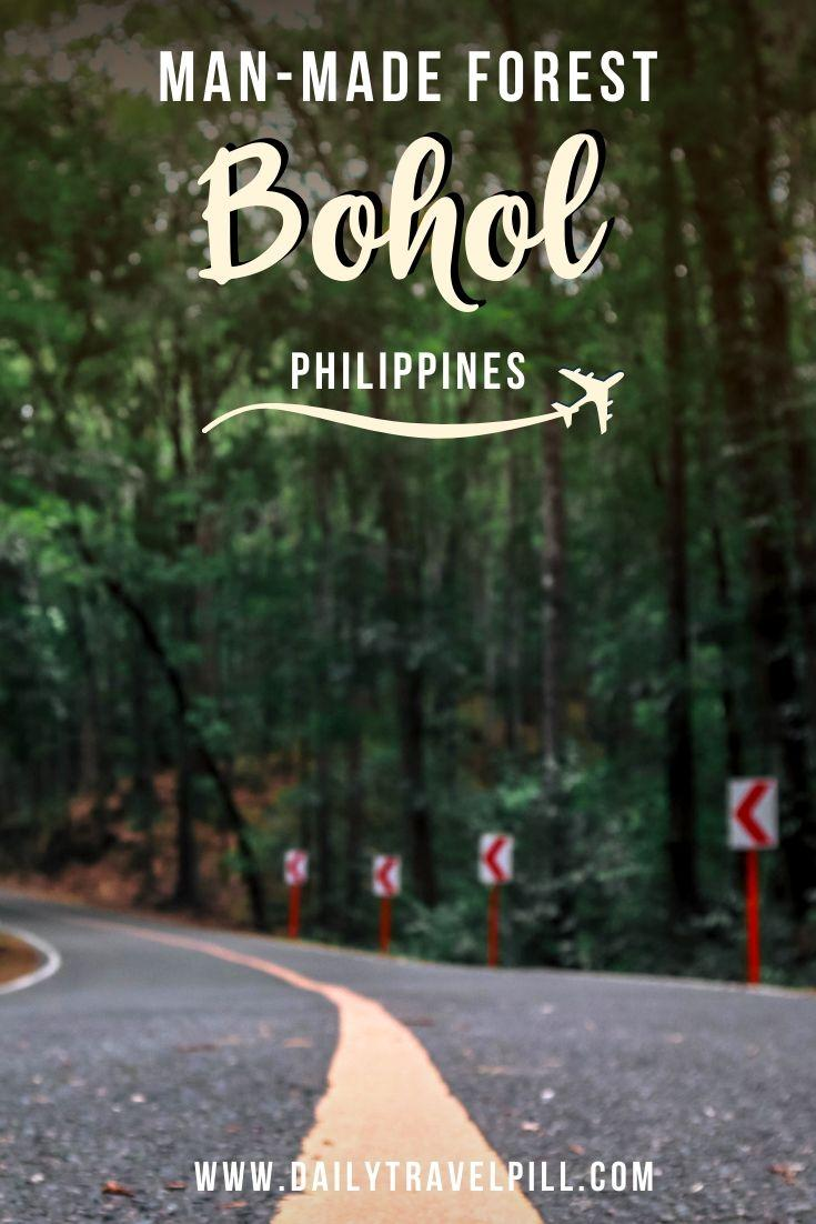 Bilar Loboc Man Made Forest in Bohol, Philippines