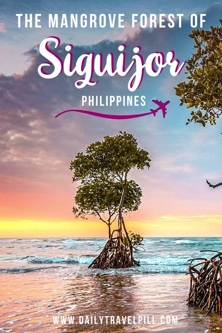 Siquijor Guiwanon Spring Park - Mangrove Forest