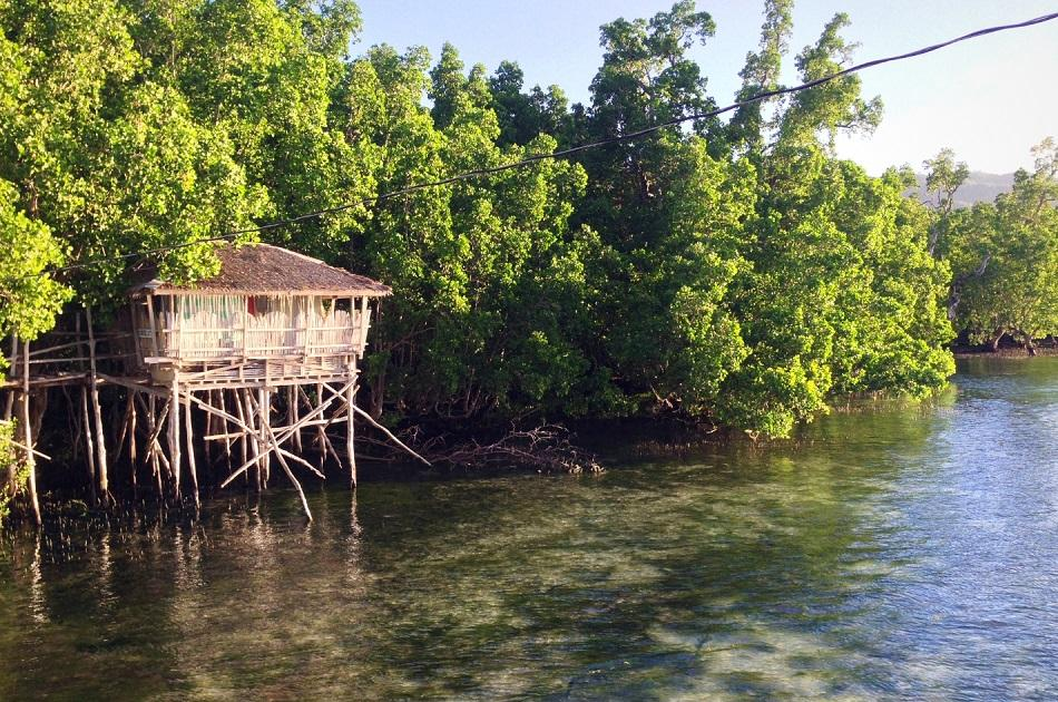Guiwanon Spring Park - Siquijor Mangrove Forest