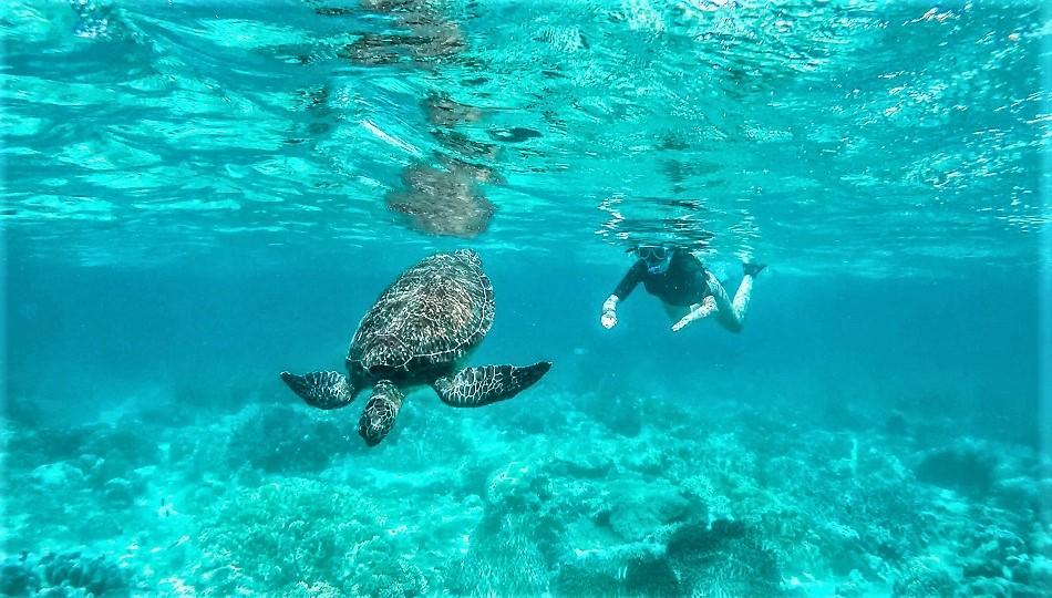 Tubod Beach to Apo Island snorkeling tour