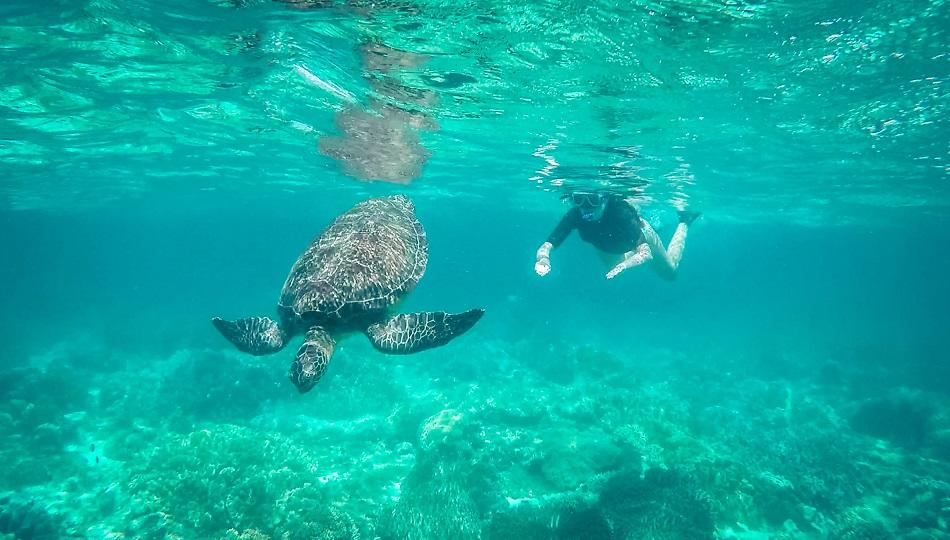 Girl snorkeling with turtle at Apo Island, Philippines