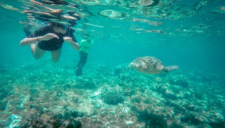 Apo Island turtle snorkeling