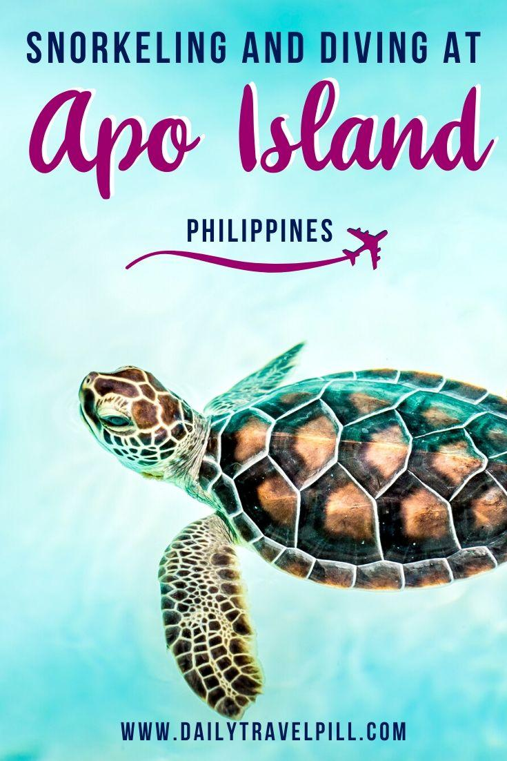 Snorkeling and diving at Apo Island, Philippines