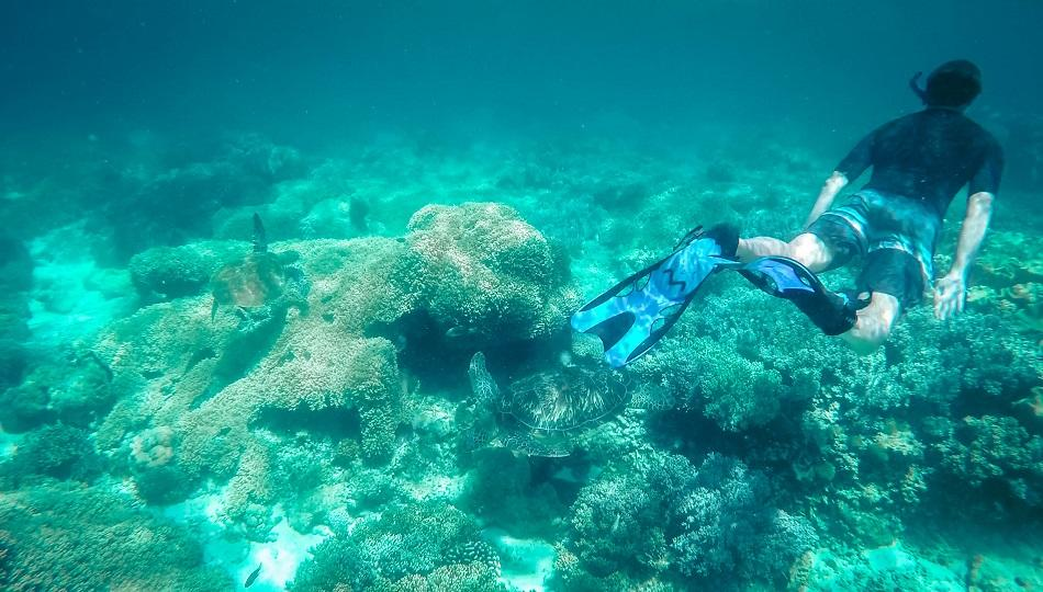 Man snorkeling with the turtles at Apo Island, Philippines