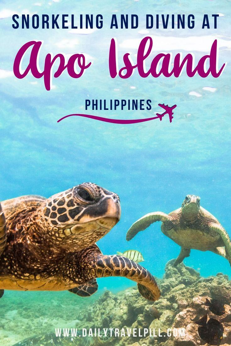 Swimming and diving at Apo Island, Philippines
