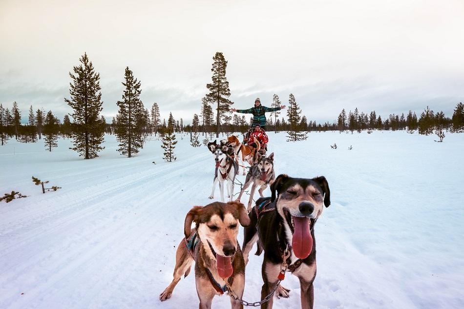 couple husky safari in Lapland