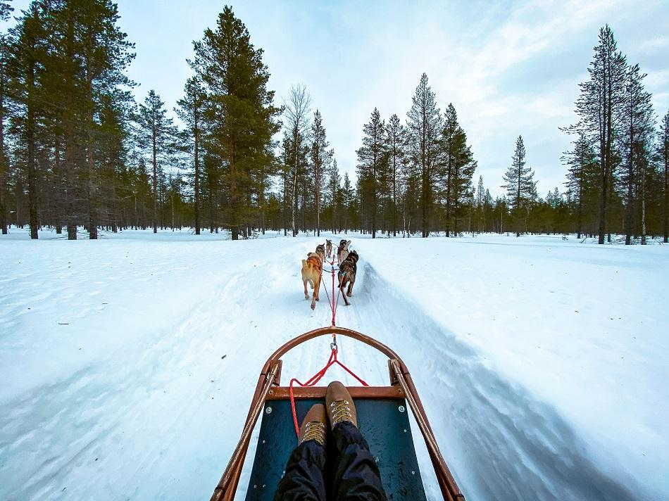 huskies pulling a sled in snow in Lapland, Finland