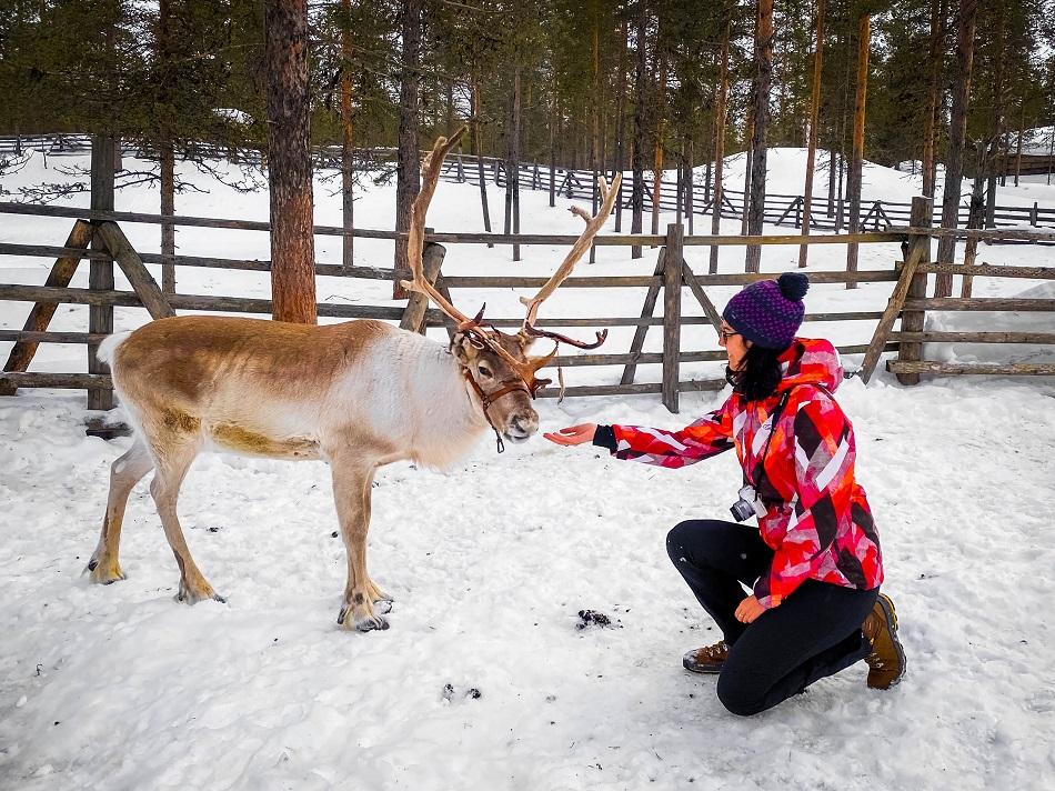 girl near a white and brown reindeer in snow in Lapland