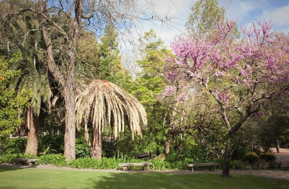 Jardim da Estrela Lisbon - trees and garden