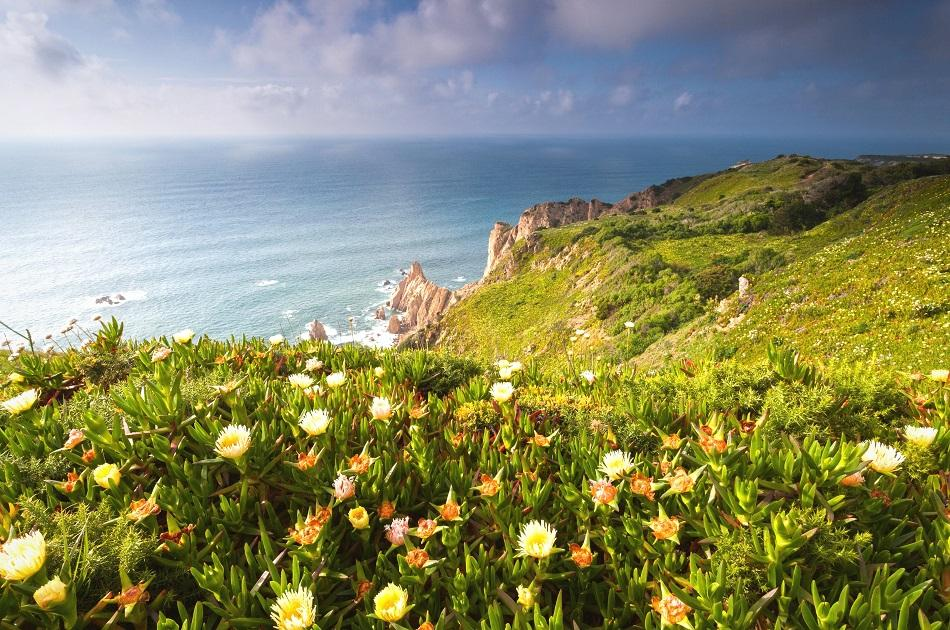 Cabo da Roca, Sintra vegetation and flowers