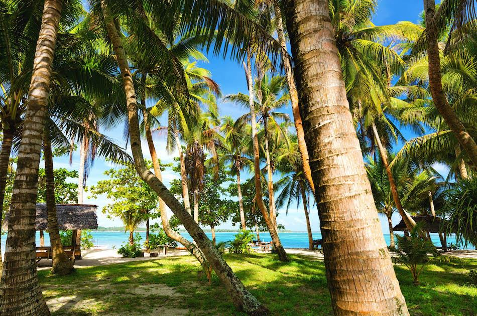 Guyam Island Siargao palm trees