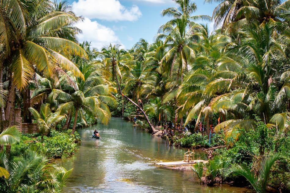 Siargao Bent Palm Tree near Maasin Bridge