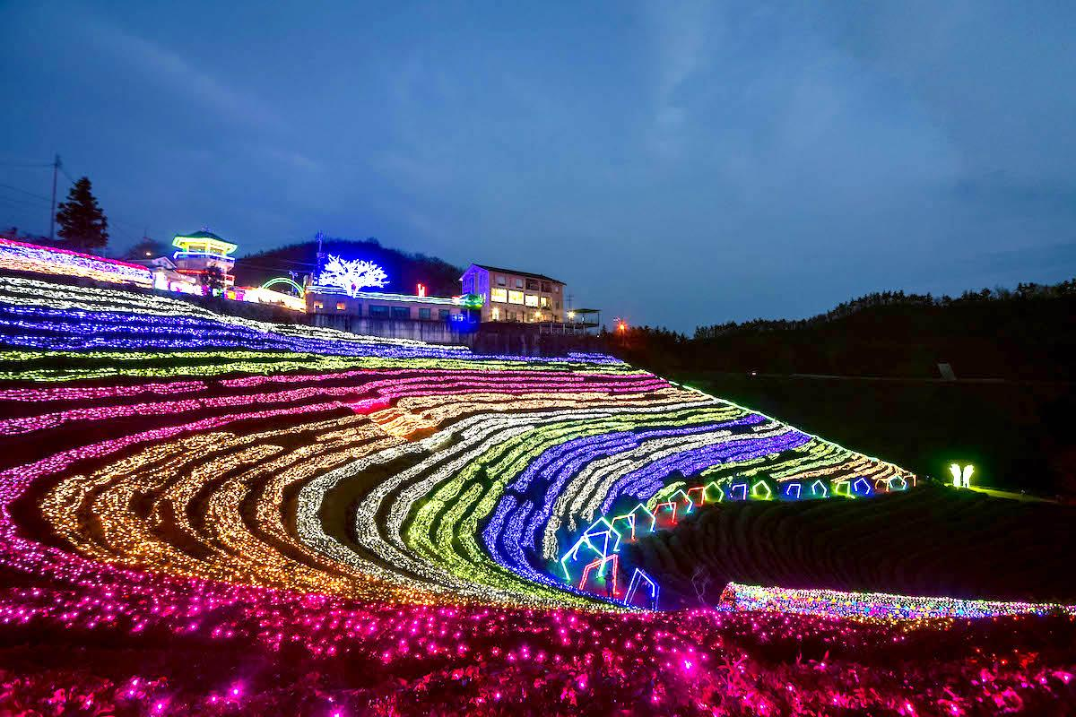 Boseong Tea Plantation Light Festival in South Korea in winter - things to do in Korea in Winter, winter destinations in Korea, winter activities in South Korea