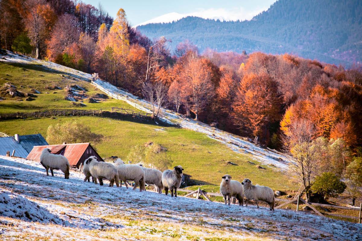 Cheile Gradistei - Fundata - village