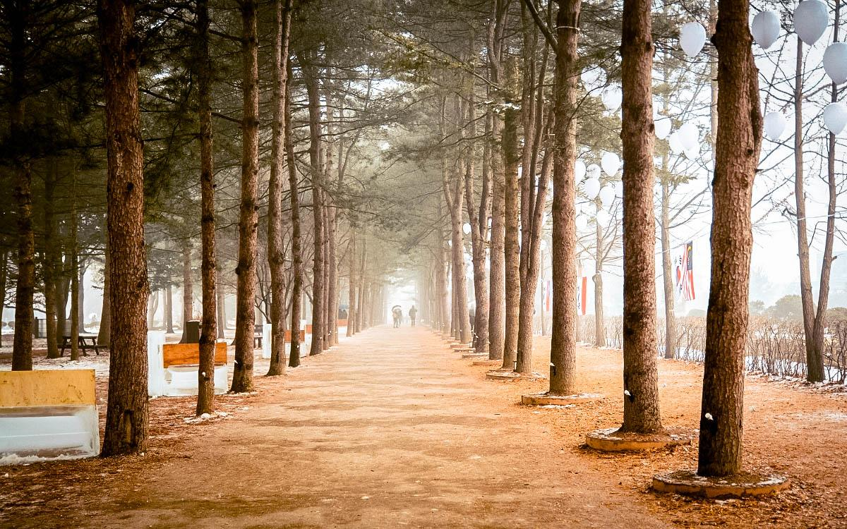 Nami Island tree alley in winter - things to do in South Korea in winter, South Korea winter activities, visiting South Korea in winter