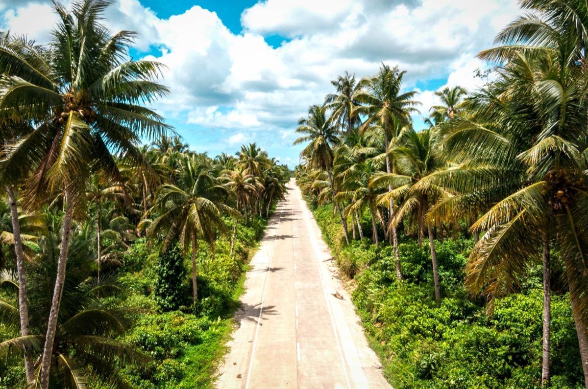 Palm tree Road Siargao, Coconut Tree Road Siargao