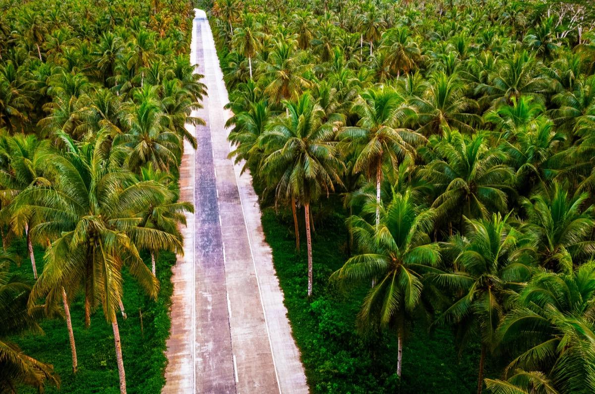 Palm tree road Siargao, Cocount Tree Road Siargao