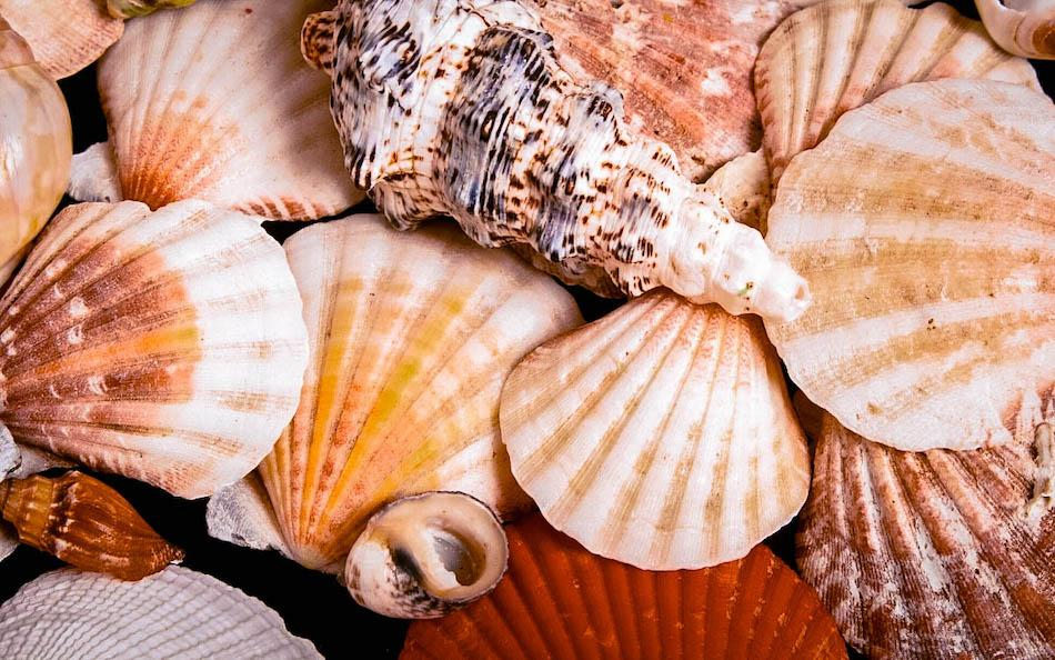 Marelle Seashell Museum Siquijor