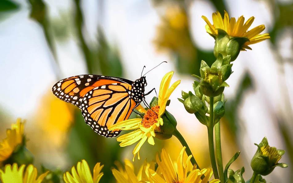 Siquijor Butterfly Farm